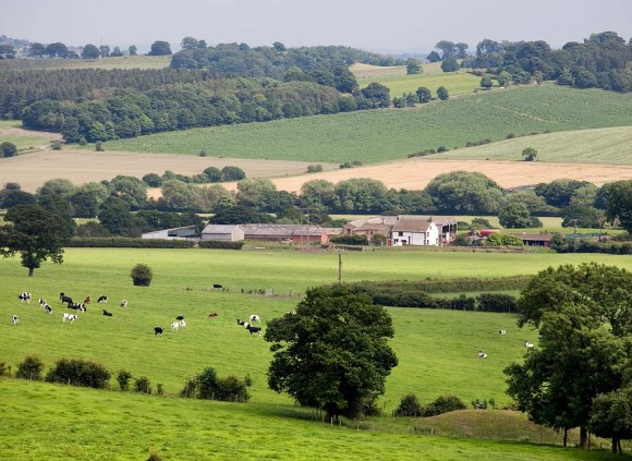 Fantastic countryside surrounds all the holiday cottages at Gilcar Farm.